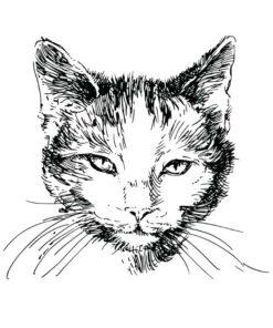 tatuagem-temporária-gato-realista